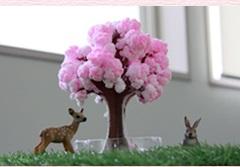 【マジック桜】不思議不思議サクラ咲く。楽天市場の総合ランキング第1位を獲得