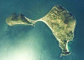 【ダッシュ島】城島リーダー&達也、沖縄でハブ駆除に挑む