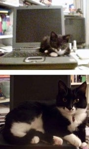 心もっていかれる猫画像【随時更新】