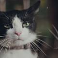 猫好き必見CM!【YKK AP】窓のCMが感動的