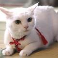 タレント猫あなごさん!猫好き女性は幸せ?【深イイ話】